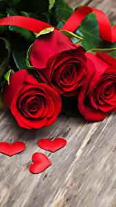 Картинки День всех влюблённых Роза Красный Сердце Лента цветок