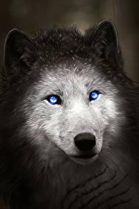 Фото Волки Рисованные Ночные Голова Животные