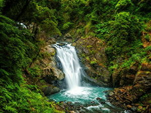 Фотографии Тайвань Водопады Утес Кустов