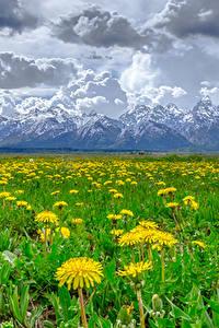 Фотографии Одуванчики Луга Гора Пейзаж Облачно Природа