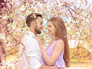 Фото Любовь Мужчина Цветущие деревья Двое Русых Улыбается девушка
