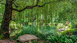 Фото США Парки Пруд Камни Дизайн Деревья Gibbs Gardens Природа