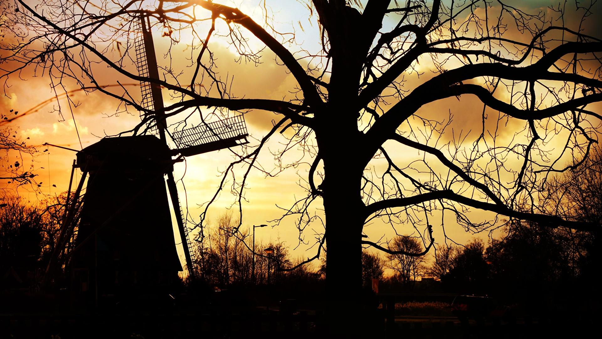 Фотография ветряная мельница силуэта Природа ветвь дерево 1920x1080 Мельница мельницы Силуэт силуэты Ветки ветка на ветке дерева Деревья деревьев