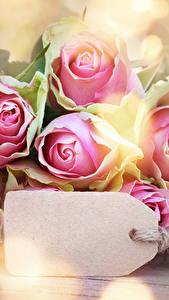 Фотография Розы Крупным планом Шаблон поздравительной открытки цветок