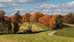 Фото Осень Луга Деревья Природа