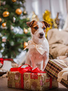 Фотография Новый год Собаки Подарок Бант Животные