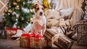 Фотография Новый год Собаки Подарки Бантик Животные