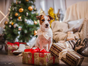 Фотография Новый год Собаки Подарки Бантик