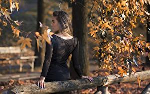 Обои На ветке Лист Вид сзади Платья Шатенка Federica молодые женщины