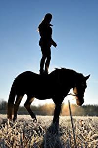 Обои для рабочего стола Лошади Поля Рассветы и закаты Силуэт Иней Траве Животные