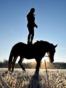 Фотография Лошади Поля Рассветы и закаты Силуэт Иней Траве Животные