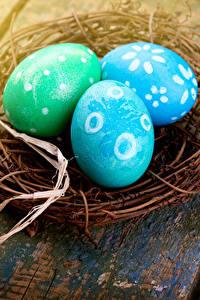 Картинка Пасха Праздники Доски Яйцами Гнездо Трое 3
