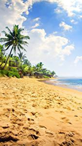 Фото Тропики Берег Небо Море Пальмы Песок Облака Пляж