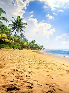 Фото Тропический Берег Небо Море Пальма Песка Облака Пляжи