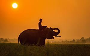Фотография Рассветы и закаты Слоны Азиаты Солнце Трава Сидящие Юноша Животные