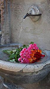 Фото Букеты Розы Вода Цветы