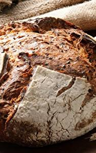 Фотография Хлеб Крупным планом Пшеница Колос Зерна
