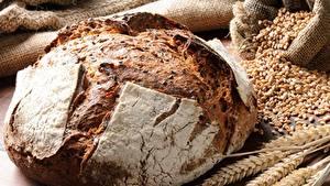 Фотография Хлеб Крупным планом Пшеница Колос Зерно
