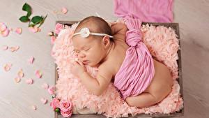 Фотографии Розы Младенец Спящий Лепестков Дети