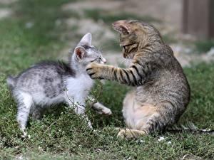 Обои Коты Трава 2 Котята Лапы Животные