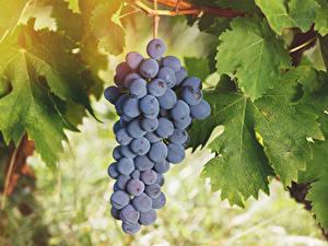 Обои Виноград Листва