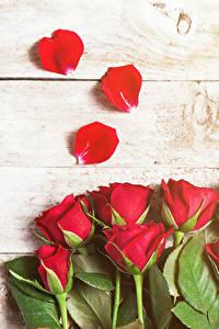 Фотография Роза Вблизи Доски Красные Лепестки Цветы