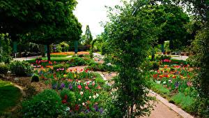 Фотографии Германия Парки Тюльпаны Кусты Botanischer Garten Solingen Природа