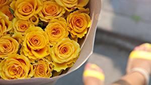 Обои Розы Букеты Желтый