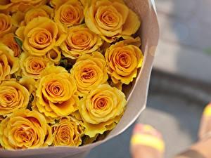 Обои Роза Букет Желтая