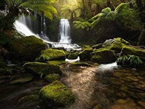 Обои Водопады Камень Мох Ручей Tasmania Природа