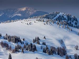 Обои Словакия Гора Зимние Снег Холмы Ель Donovaly Природа