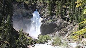 Картинки Канада Речка Водопады Камень Леса Утес River Kicking Horse, British Columbia, Yoho National Park Природа