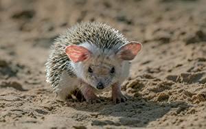 Фото Ежи Песка Смотрит животное