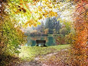 Картинка Пруд Осень Скамейка Ветвь Листва Тропа Природа