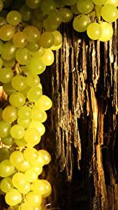 Обои Виноград Ствол дерева