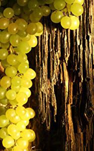 Обои Виноград Ствол дерева Еда