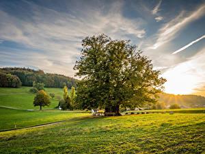 Обои Швейцария Рассветы и закаты Луга Дерево Linner Linde