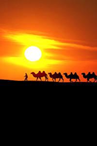 Фотографии Рассветы и закаты Пустыня Верблюды Солнца Силуэт Природа