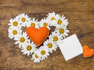 Фотографии Ромашки День святого Валентина Сердечко Шаблон поздравительной открытки Цветы