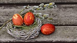 Картинка Пасха Доски Гнездо Яйца Ветка