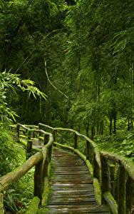 Фотографии Тропики Леса Мосты Бамбук Мох Деревья Деревянный Jungle