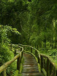 Фотографии Тропический Леса Мост Бамбук Мха Деревья Из дерева Jungle