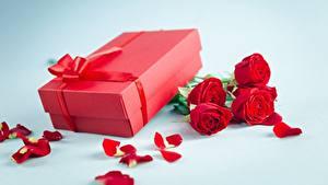 Фотография Розы День всех влюблённых Подарки Коробка