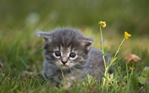 Фото Кот Траве Размытый фон Смотрят Котенка животное
