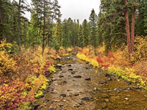 Фотография Америка Парки Осень Лес Камень Ель Ручей Flathead National Forest Природа