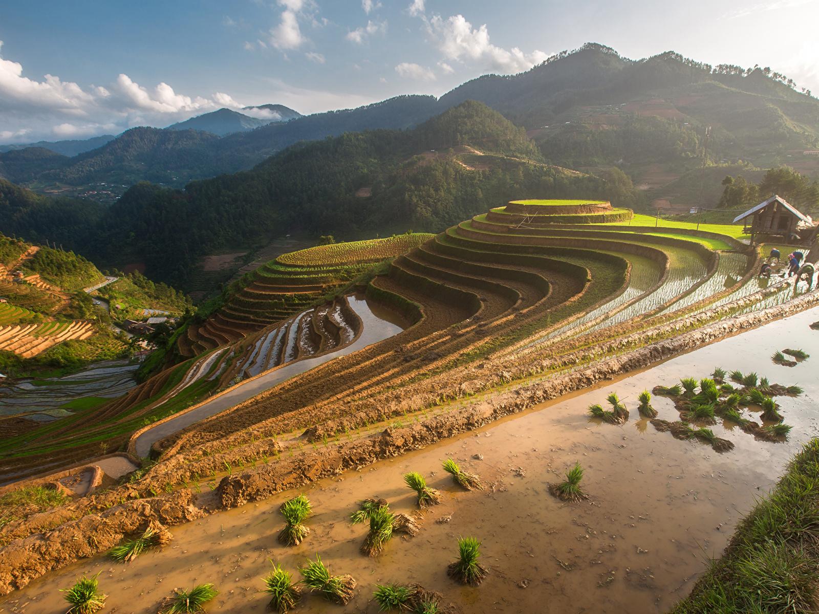 Фотография Вьетнам Mu Cang Chai гора Природа Поля 1600x1200 Горы