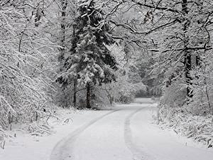Фото Зимние Лес Дороги Снегу Деревья
