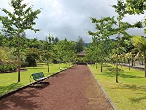 Фотографии Парки Португалия Скамейка Аллея Дерево Azores, Furnas город