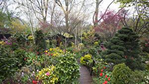 Обои Англия Сады Тюльпаны Мост Walsall Garden Природа