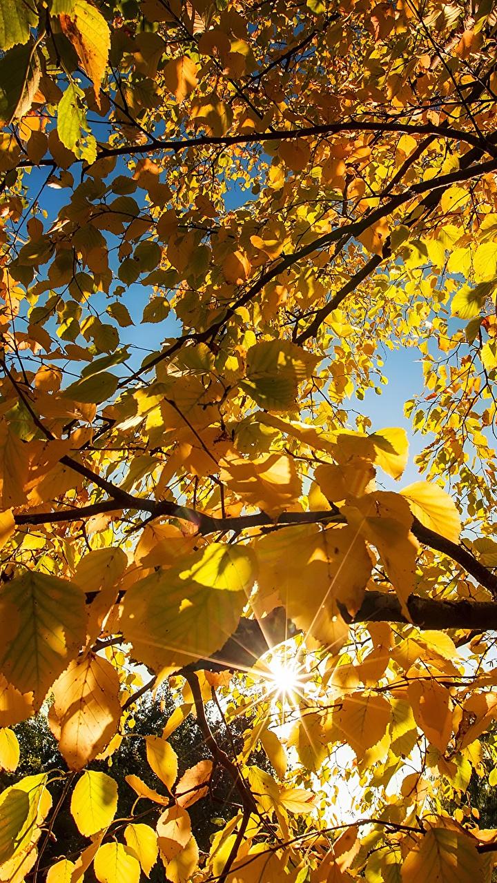 Листья деревьев Раскраски распечатать бесплатно